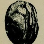 σάρωση0015